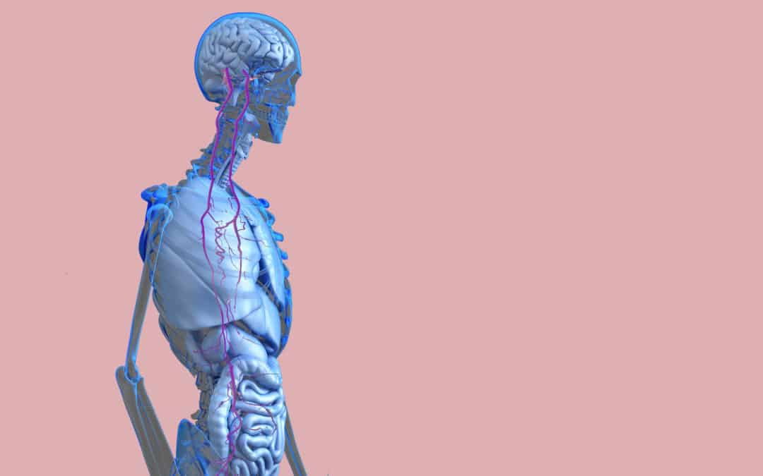 Love Your VAGUS oder eine Umarmung für deinen Entspannungs Nerv